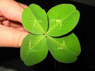 trebol-de-cuatro-hojas-atraer-la-buena-suerte-5499425