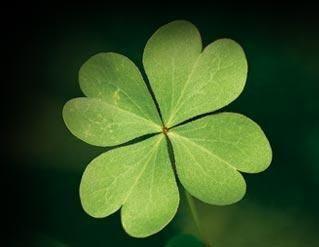 trebol-de-4-hojas-amuletos-2387700