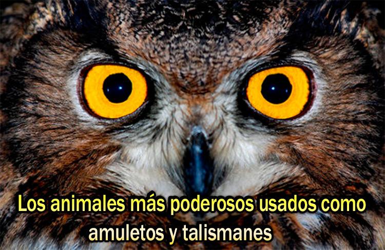 animales mas poderosos usados como amuletos y talismanes1 3920821