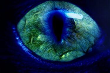 Detectar y eliminar el mal de ojo 8084661